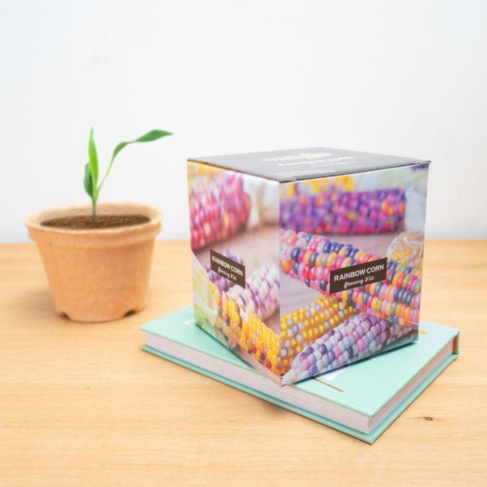 Box à planter de maïs arc-en-ciel