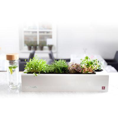 Cadeau couple - Assortiment de Plantes Aromatiques CressToday
