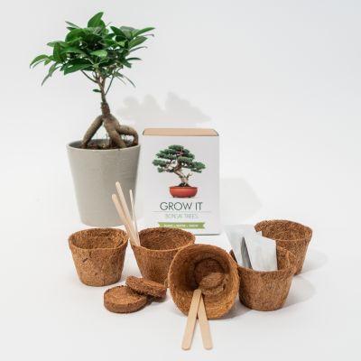 Nouveautés - Kit Grow It - Arbre Bonsaï