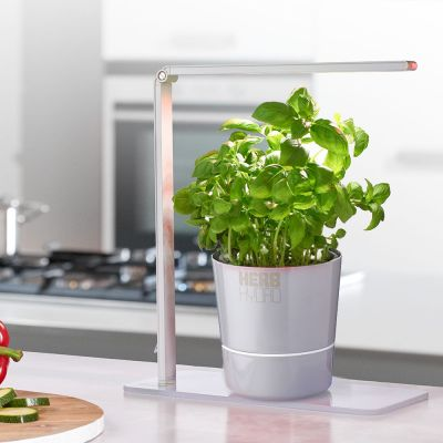 Cuisine & Barbecue - Lampe Herb Booster