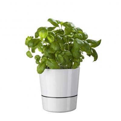 Cadeau fête des mères - Pots de fleurs Herb Hydro