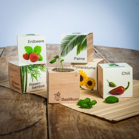 Ecocube - plantes dans cubes en bois