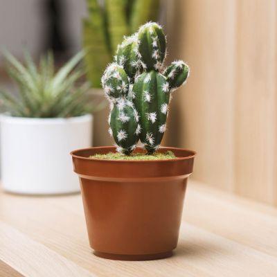 Jeux & Farces - Cachette Secrète Mini Cactus