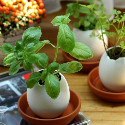 Faites-le vous-même - Eggling - L'oeuf plante