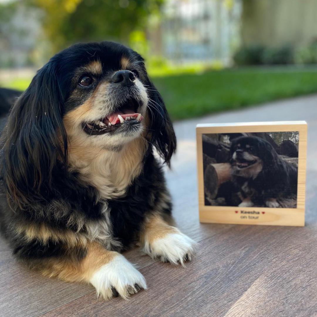 Cadeaux pour animaux Photo carrée sur bois avec image et texte